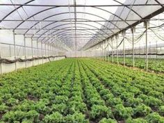 Agri futurologist all set to introduce next generation cropping technologies in India - The Times of India