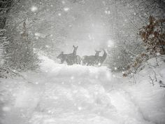 """this is the winner photo! thanks to all the photographers and congratulations to Pietro Santucci with """"magie nel Parco Nazionale D'Abruzzo"""""""