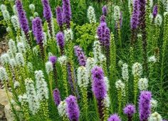 16 Landscaping Trends You Can Expect to See This Year: Learn why you should include native plants in your landscape design this year. Landscaping Images, Backyard Landscaping, Spring Garden, Lawn And Garden, Chicago Botanic Garden, Plant Images, Drought Tolerant Plants, Desert Plants, Garden Pests