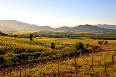 Cachapoal Wine Country in Chile.