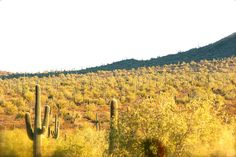 Beautiful Desert.