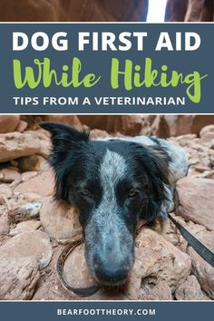 Want to hike with your dog? Learn the basics of dog first aid when you're out on the wilderness with these expert tips from veterinarian Nancy East. Learn symptoms and treatment of insect bites, sprains, ticks, snake bites, heat exhaustion and more for dogs, plus how to make a simple dog first aid kit for hiking.