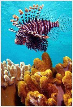 The Amazing Maldive