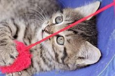 Kitten with Yarn - Jigsaw Puzzles Online at JSPuzzles