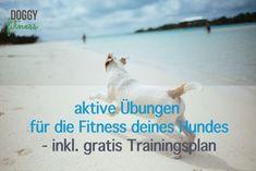 Aktive Übungen für die Fitness deines Hundes