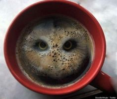 This striking coffee cup art was created by an anonymous friend of artist Stuart Rutherford, who posted a picture of the intense owl to his twitter. The foam-creation is made after the clever java-drinker dropped two potato-based snacks called Hula Hoops into his mug .