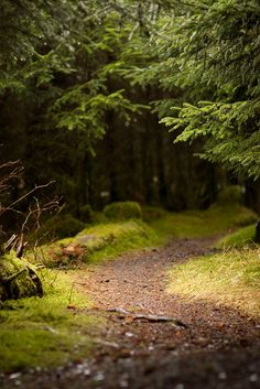 """homeintheforest: """" Fate's Path by Hannah Boleen on Flickr. """""""