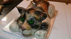 Cat or dog? Cake 😂