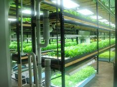 Aquaponics Farming Business Expands in the Twin Cities and Revitalizes Neighborhoods – The Global Grid
