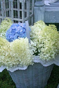 Bluewhite Hydrangeas