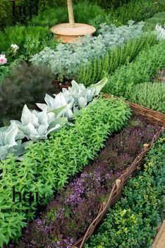 How to Grow a Pest Repellent Herb Garden:  Pests covered are   moths, slugs, flies, cats, fleas, ants, mice, Japanese beetle, mites, mosquitoes.