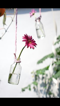 Flower in the bottle
