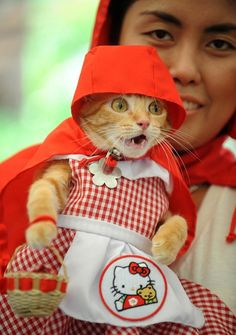 An adopted cat wears a Little Red Riding Hood costume for a charity event of the Society of Animal Welfare in the Philippines.