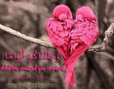 And We created you in pairs. 78:8 | © www.hashtaghijab.com
