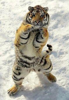 Estoy entrenándome para el box ...