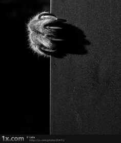 Коты-невидимки