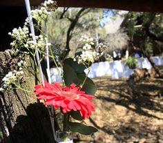 Bush Wedding, First Event, Wedding Venues, Bridal, Plants, Wedding Reception Venues, Wedding Places, Plant, Bride