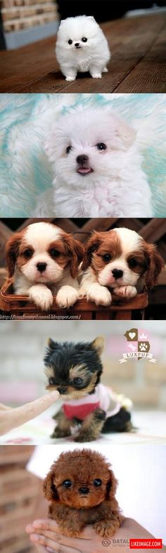 Small puppies