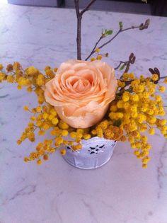 Festa della donna#fiori#mimosa#rosarosa