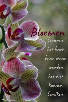 mooie bloemen spreuken 336 beste afbeeldingen van teksten   Hand lettering, Typography en  mooie bloemen spreuken
