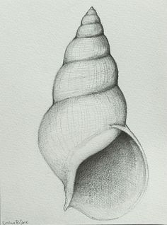 Drawing Pencil Shell number 2 Original pencil drawing on by SimpleArtStudio - Easy Pencil Drawings, Pencil Drawing Tutorials, Cool Art Drawings, Art Drawings Sketches, Drawing Ideas, Pencil Sketches Of Nature, Drawing Drawing, Drawing With Pencil, Drawings Of Love