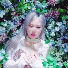 Rose Video, Blackpink Video, Lisa Blackpink Wallpaper, Rose Wallpaper, Foto Rose, Rose And Rosie, Pink Dress, Flower Girl Dresses, Rose Icon