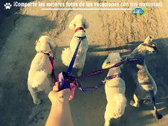 Comparte en las redes sociales las mejores fotos de tus vacaciones junto con tus mascotas con el HashTag #ViajoConMascotas y #HosteríaMarySol  ¡Ellos también son bienvenidos a #SanAndrés y a nuestra hostería!  #Pets #Mascotas #Dogs #Perros #Animals #LoveAnimals #Colombia #Animales.