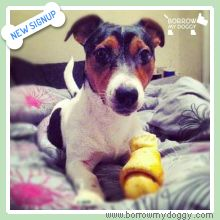 Tucker the Jack Russel has signed-up! He loves nothing more than cuddling up for a nap preferably under a blanket ☺