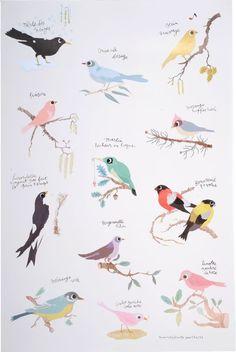 Tinou Oiseaux Poster