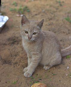 Beautiful kitten near the bus stop #nelkytplusblogit#kissa#cat#kitten#catsofisrael####