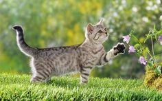 Grappige kattenfilmpjes maken een mens gelukkig.