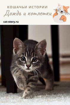 Дождь и котлетки — Кошачьи истории Cats, Animals, Gatos, Animales, Animaux, Animal, Cat, Animais, Kitty