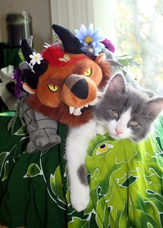 Sylcharri cat naps - Guild Wars 2 - Caturday