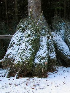 Want your real Christmas tree to stay green longer? Before putting ...