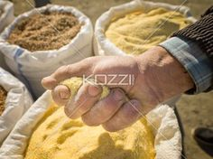 close-up image of human hand with spices in a romanian market. - Close-up shot of human hand holding handful of spices.