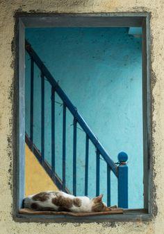 Sleeping Cat! by Vishaal Mehta on 500px