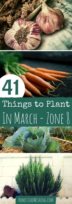What to plant in March for zone 8? March gardening is stupendous in zone 8. There are many things to plant this time of year, and the weather is beautiful! | Homestead Wishing, Author Kristi Wheeler | http://homesteadwishing.com/what-to-plant-in-march/ ‎ | Plant-in-March, gardening-in-march. What-to-plant |