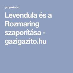 Levendula és a Rozmaring szaporítása - gazigazito.hu