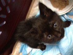 Truitt fka Bella, Hip and Leg Injuries   Anjellicle Cats Fundraising