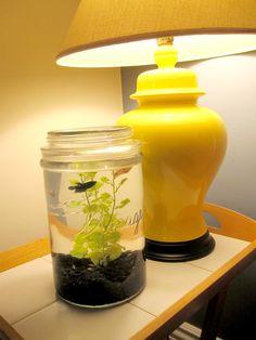 Love this storage jar for a fish tank idea