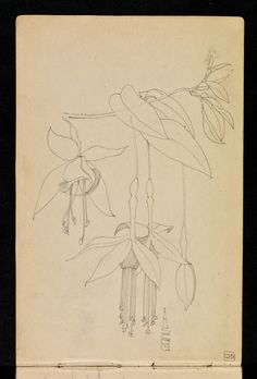 Hunterian Art Gallery Mackintosh collections: GLAHA 53012/10 fuchsia