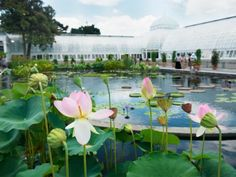 New York Botanical Garden, New York City : Best Botanical Gardens in the US : TravelChannel.com