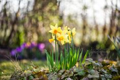 veredit-iertes - photographic - poems : Spring is ...