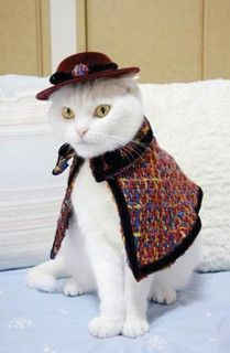 Vice - fashion cats by Queenie & the Dew, via Flickr