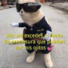 Memes Lindos, Funny Memes, Jokes, Cute Love Memes, Love Phrases, Wholesome Memes, Meme Faces, Reaction Pictures, Just In Case