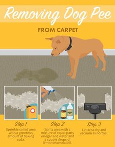 Dog Training Tips Removing Dog Pee from Carpet - Stains like grease, paint, and ink can be tough to remove from clothing and furniture. Learn how to get them out for good, as well as pet stains! Diy Pet, Gato Gif, Dog Training Tips, Potty Training, Training A Puppy, House Training A Dog, Agility Training, Dog Care, Dog Mom