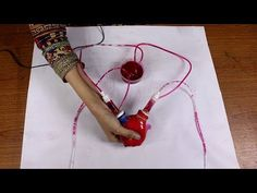 working model of heart, working model for science project, diy human circulatory system, how to make heart model for science fair projects, Science Exhibition Projects, Biology Science Fair Projects, Physics Projects, Chemistry Projects, Science Experiments, Circulatory System For Kids, Heart Projects, Human Body Systems, System Model