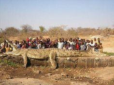 Village locals catch a monster.  Looks to be about 10 photoshopped feet too long.