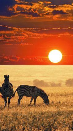 Coucher de soleil en Afrique du Sud (Sunset in South Africa) Source :…