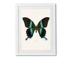 Print in lijst Papilio Blumei, multicolour, 30 x 40 cm